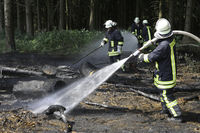 Forest fire due to carelessness