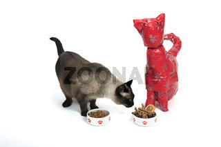 Katze in Geschenkpapier