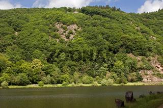 Mischwald am Ufer der Saar, Saarschleife Mettlach