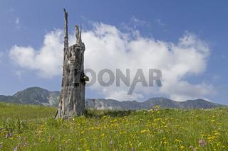 Baumstumpf im Gebirge