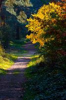 A path in a wood in autumn