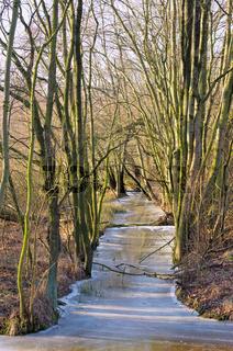 Spreewald im Winter - Spree Forest in winter 01