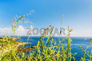 green grass close up on Atlantic coast