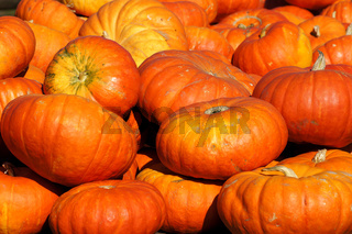 Orangerote Speisekürbisse