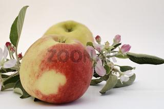 Äpfel und Apfelblüten