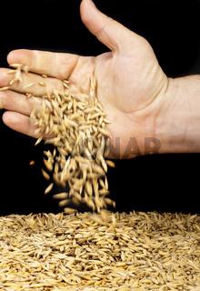 handful oats