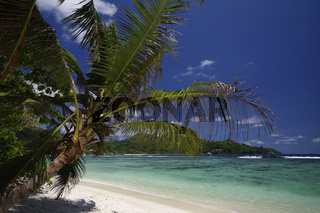 Palme am Strand von Baie Lazare, Seychellen