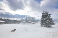 Dog and winter storm