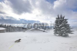 Hund im Wintersturm