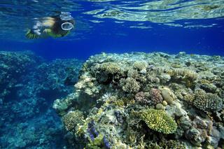 Schnorchlerin und Korallenriff, Woman snorkeler explores coral reef