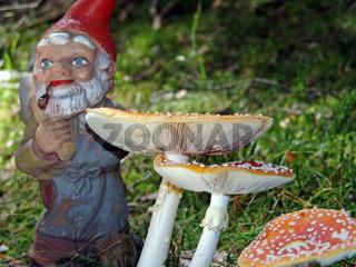 Gartenzwerg und Pilze