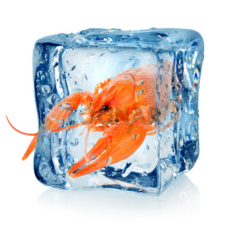 Crawfish in ice cube