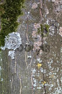 Steinwand