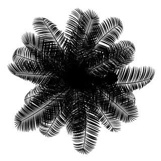 top view silhouette of coconut palm tree isolated on white background