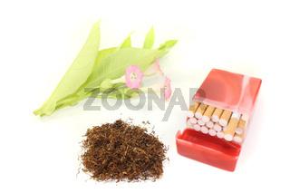 Tabak mit Zigaretten
