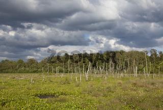 Wiedervernässtes Moor, Deutschland, Europa