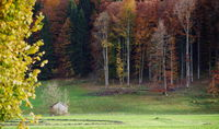 Cattle pasture with a wooden hut between bare trees on the edge of the autumn forest