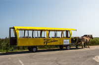 Horse-drawn carriage on Hallig Hooge, Schleswig-Holstein, Germany