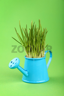 Spring grass in watering pot over green paper