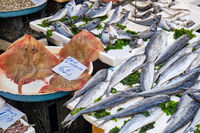 Different kinds of fish for sale at a market
