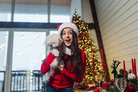 Girl holding a small dog in her arms on new year's eve