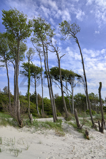 Ostsee Darss-Wald Weststrand 1