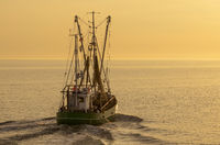 Fishing trawler at sunset, North Sea, Buesum, Schleswig-Holstein, Germany