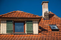 Red roof tiles under a steel blue sky from the attic of a neglected house