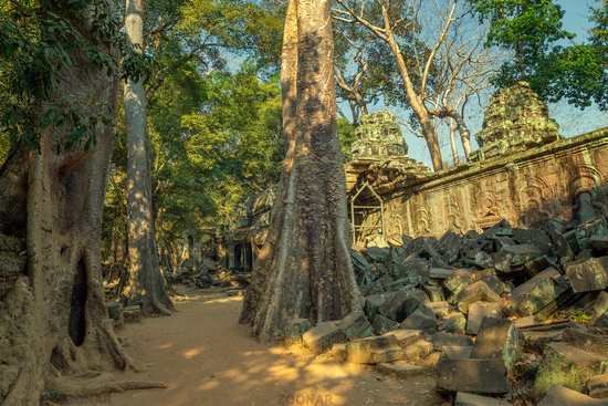 Ta Prohm temple in Angkor Wat Cambodia