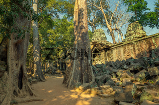 Ta Prohm temple in Angkor Wat Cambodia