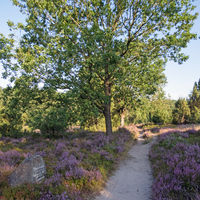 Hiking trail and sign pointing to points of interest at Lueneburg Heath, Lower Saxony, Germany