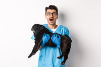 Vet clinic concept. Happy male doctor veterinarian holding cute black pug dog, staring at camera amazed, white background