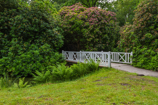 Luetetsburg castle garden with rhododendron and white wooden bridge, East Frisia, Germany