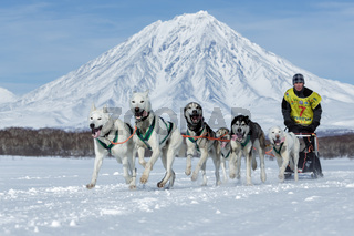 Russian Cup of Sled Dog Racing (snow disciplines), Kamchatka Sled Dog Racing Beringia