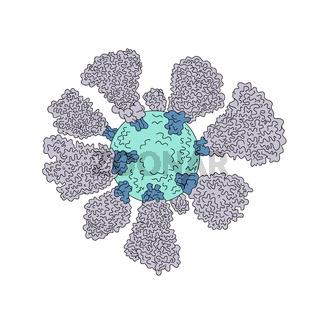 Coronavirus Cell Miscroscopic Line Drawing