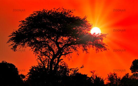 Sunset at Murchison Falls National Park Uganda