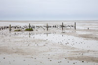 Fence at the Wadden sea
