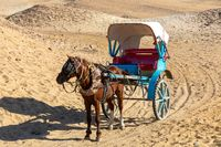horse chariot in desert, Giza, Egypt