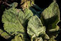 Macro shot of dewdrops on a fresh green leaf