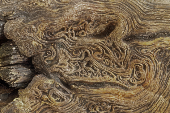 Surface of a dead tree trunk