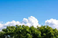 Top of green tree, beautiful blue sky, white clouds on horizon with copy space