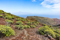 Landscape on La Gomera with flowering spurge plants and view of Tenerife
