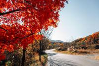 Tongdosa temple mountain hiking road at autumn in Yangsan, Korea