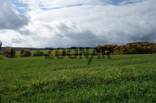 20201024_Gründüngung, green manure.jpg