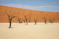 Dead Vlei in the Namib Naukluft, Namibia