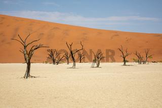 Dead Vlei in the Namib Naukluft, Namibia