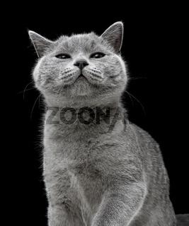 kitten on black background. vertical photo.