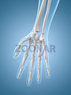 medical illustration of the hand bones