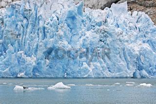 Seehund rastet auf einer Eisscholle vor einem Gletscher