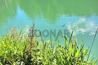 Libelle am Ufer über grünem Gras